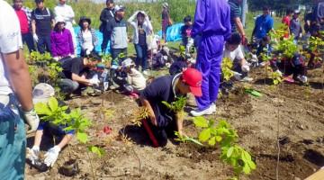 町を挙げて開催。小さな子供たちも自分の手で植えました