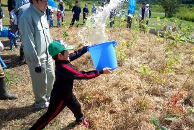 植えた苗木を干し草で覆い、たっぷりの水を与えます。子供たちはバケツを使ってどこまで水を飛ばせるかを楽しみながら競いました