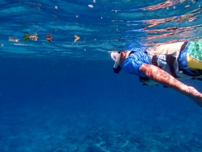 海をちょっと覗いてみるだけで、いろいろな発見があります