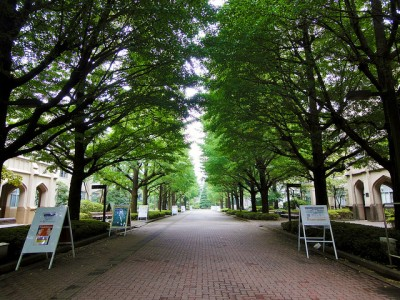奥にある短期大学のキャンパスへと抜ける並木道。毎朝ここを通るのがお気に入りでした