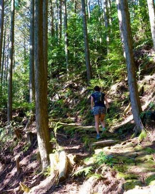 ゴール6キロ手前の熊野古道通り峠、最後の力を振り絞って登る選  手(熊野市紀和町矢ノ川地区)