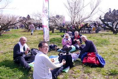 坂田城跡では剪定された梅を観梅しながらお弁当、格別!