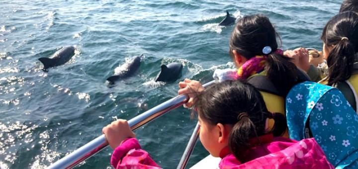 船のデッキからイルカの群れを眺める子供たち