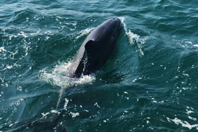 イルカのアップ写真も撮れた!