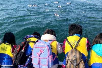 イルカの群れに出会えて楽しんでいる子供たち