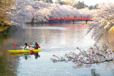 桜が満開の川にカヌーで繰り出す。赤い橋とピンクの桜、黄色いカヌーの美しいコントラスト