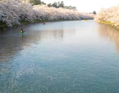水面に桜の花びらが浮かんでいます