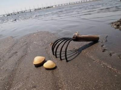 潮干狩りのイメージ画像
