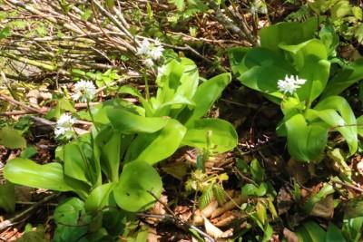 登山道中の植物(種類は不明です。悪しからず)