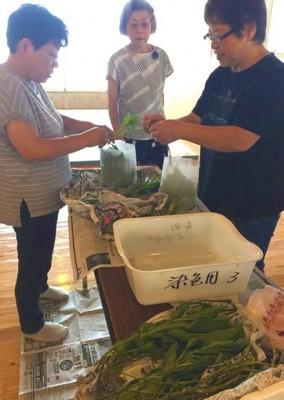 生葉の摘み取りが最初の作業、たくさん集めるぞ