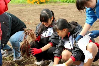 芋を掘り出した女子中学生の楽しそうな様子