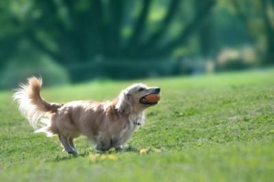 犬は人間にとってなくてはならない存在です