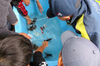 大きいタライに移して、さつき沼に生息する生物を観察しました