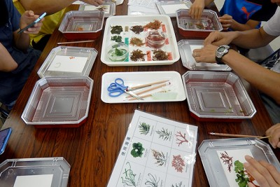 今回実現が叶わなかった「海藻おしば教室」