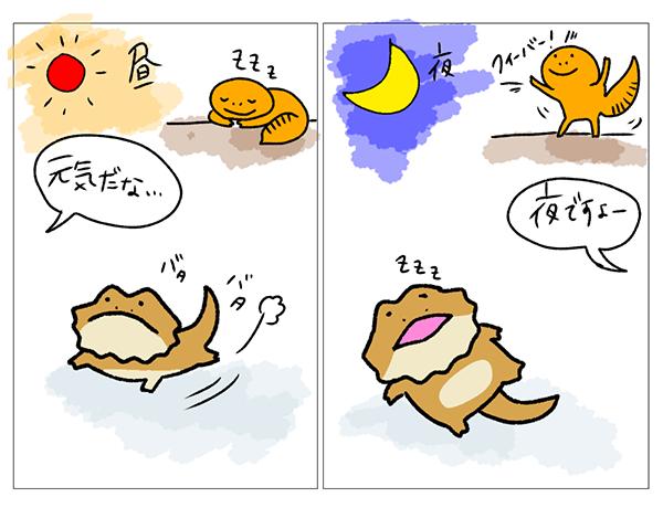 ②【昼行性と夜行性】