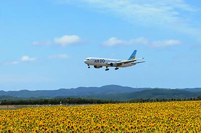 女満別空港周辺のひまわり畑