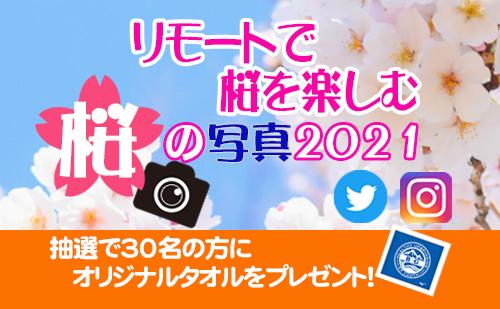 各地の桜をリモートで楽しみませんか。皆さんが撮影した桜の写真を募集中!(応募締切:5月16日)